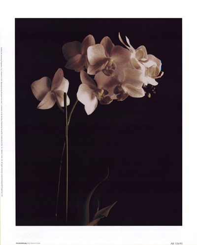 Orchid Study I Poster by Dianne Poinski for $12.50 CAD