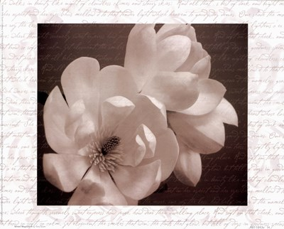 Winter Magnolia II Poster by Tony Stuart for $16.25 CAD