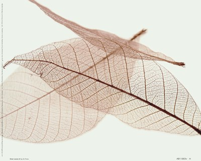 Sheer Leaves IV Poster by Unknown for $16.25 CAD