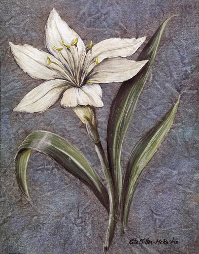 White Lilly Poster by Kate McRostie for $15.00 CAD