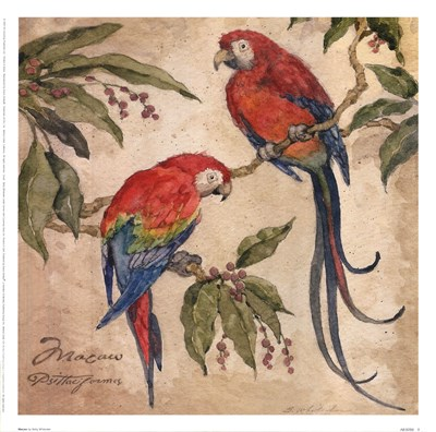 Macaw Poster by Betty Whiteaker for $16.25 CAD