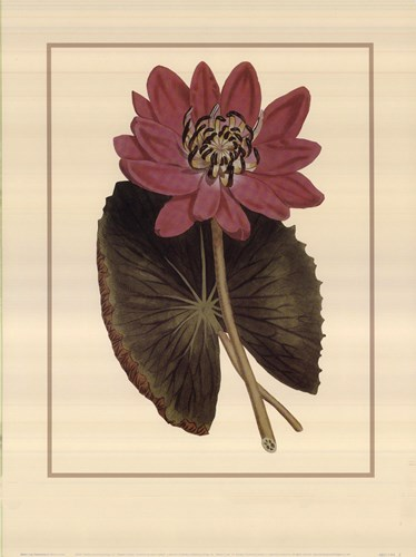 Water Lily Fantasmo Poster by Rafael Landea for $20.00 CAD