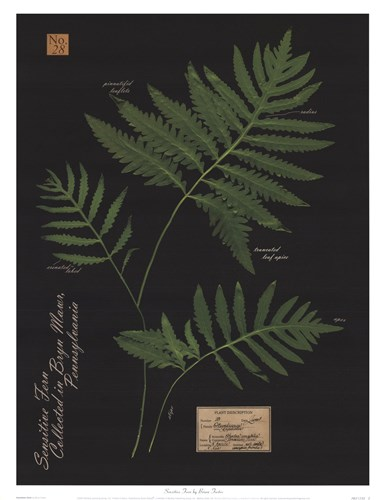Sensitive Fern Poster by Brian Foster for $21.25 CAD