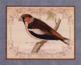British Birds I