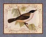 British Birds IV