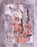 Love Letter Gladioli