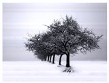 Winter Tree Line I