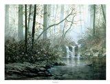 Transcending Forest