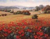 Italian Poppy Vista II