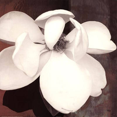 Magnolia Blue II Poster by Katrina Craven for $27.50 CAD