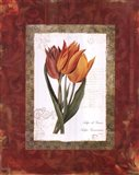 Tulip De Gesner