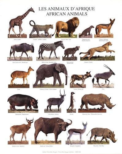 African Animals Poster by Unknown for $10.00 CAD