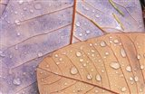 Waterdrops on Magnolia Journal
