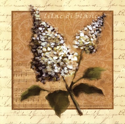 White Lilac Square Poster by Julie Ueland for $21.25 CAD
