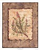 Vintage Herbs - Thyme