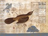 Bird Brained II