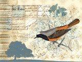 Bird Brained IV
