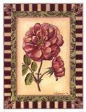 Renaissance Rose I