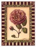 Renaissance Rose II