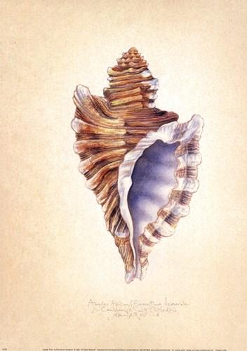 Angular Triton Poster by Richard Van Genderen for $16.25 CAD