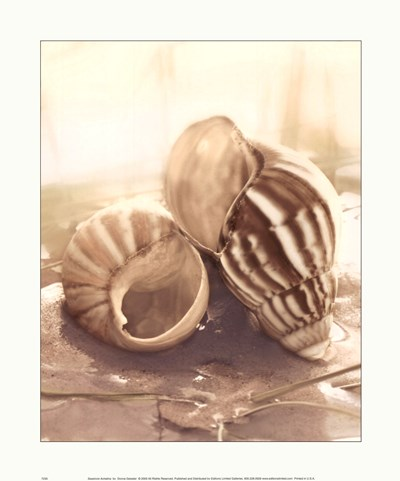 Seashore Achatina Poster by Donna Geissler for $13.75 CAD