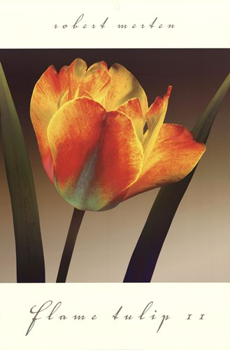 Flame Tulip II Poster by Robert Mertens for $46.25 CAD