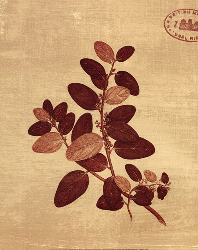 Leaf Study II Poster by Paula Scaletta for $16.25 CAD
