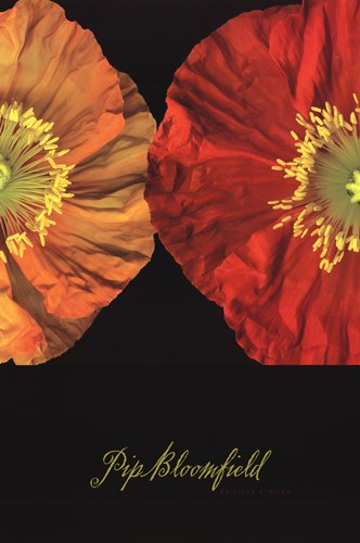 Red And Yellow Poppy II Poster by Pip Bloomfield for $46.25 CAD