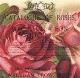 Roses IV
