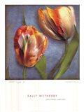 Parrot Tulips I