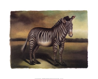 Zebra Poster by Denise Crawford for $27.50 CAD