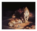Pair Of Leopards