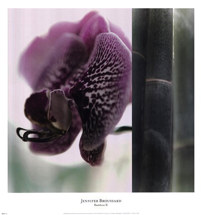Bamboo II (Flower II) Poster by Jennifer Broussard for $20.00 CAD
