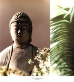Buddha Breeze II