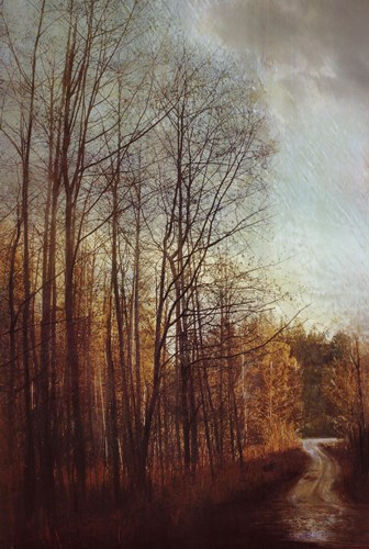 Winter Light I Poster by Amy Melious for $40.00 CAD