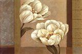 Tulip Duet - Cs