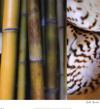 Bamboo II Poster by Jennifer Broussard for $30.00 CAD