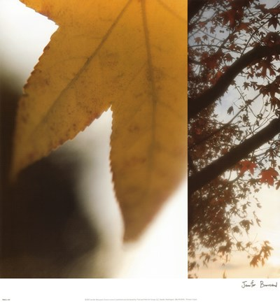 Autumn Leaves II Poster by Jennifer Broussard for $30.00 CAD