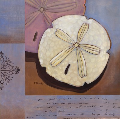 Sanibel Sand Dollar Poster by Paul Brent for $12.50 CAD