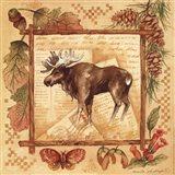 Moose - square