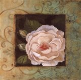 Antique Rose IV