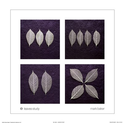 Leaves Study Poster by Mark Baker for $10.00 CAD