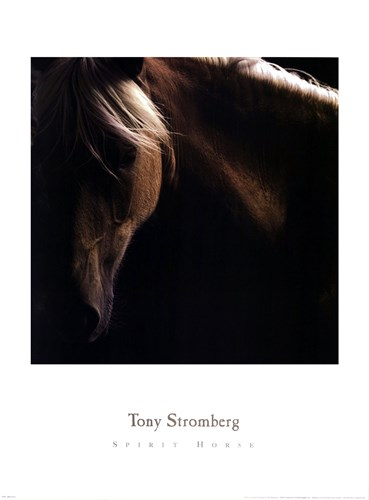 Spirit Horse Poster by Tony Stromberg for $35.00 CAD
