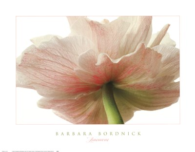 Anemone Poster by Barbara Bordnick for $35.00 CAD