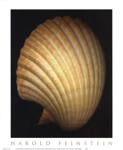 African Fan Scallop Poster by Harold Feinstein for $15.00 CAD