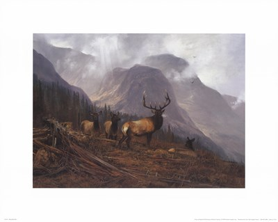 Bookcliffs Elk Poster by Michael Coleman for $20.00 CAD
