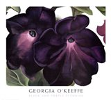 Black and Purple Petunias