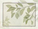 Ghost Leaves II