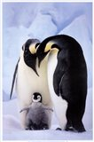 Penguin Family Portrait