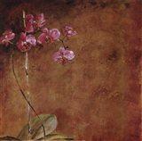 Orchid Series II (Simplicity II)